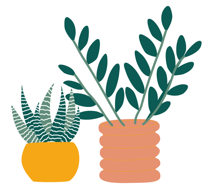 Plantes blog déco